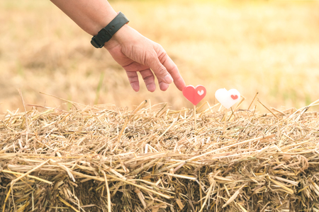Female hand and two little heart candles on rice straw in paddy field.