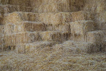 Bales of Straw in a shed for feeding horses