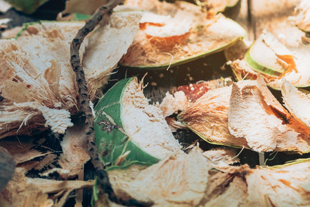 Close up to Coconut peel on the table after being peeled to make coconut juice. Stockfoto