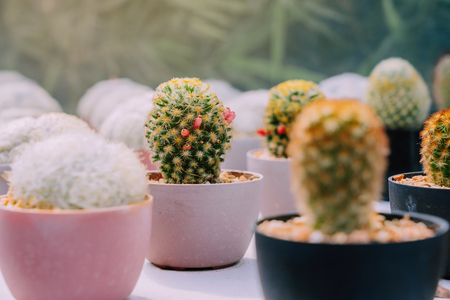 Variety of Small cactus and succulent plants in various pots to decorate in coffee shops
