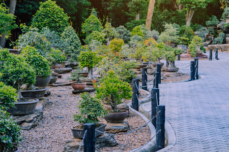 Variety of Bonsai trees were planted in pots and was many sorted for decoration in public garden.