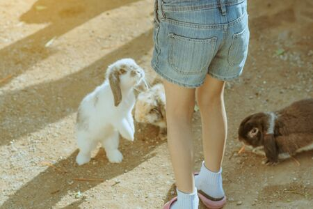 Kid feeding and petting rabbits  outside during spring time in garden. Archivio Fotografico