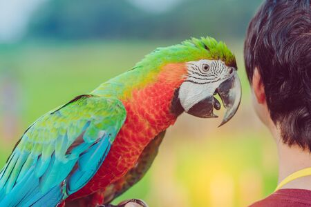 Colorful macaw parrot perching on the hand and wait to fly for excercise in the field