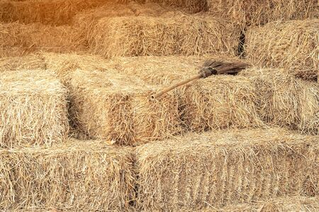 Piled stacks of dry straw collected for animal feed. Dry baled hay bales stack.