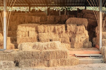 Piled stacks of dry straw collected for animal feed. Dry baled hay bales stack. Standard-Bild