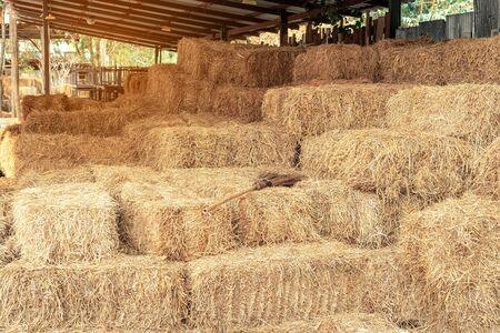 Piled stacks of dry straw collected for animal feed. Dry baled hay bales stack. 스톡 콘텐츠