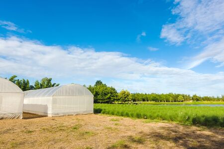 Domed Greenhouse or tunnel for young plants growing nursery house in a farm. 写真素材