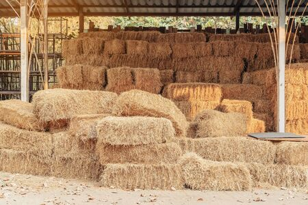 Piled stacks of dry straw collected for animal feed. Dry baled hay bales stack. Stok Fotoğraf