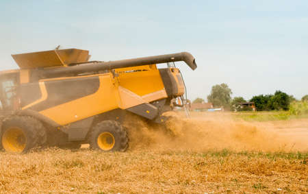 Wheat harvesting on field in summer season. Wide chaff spreading by combine harvester with rotor separation. Process of gathering crop by agricultural machinery: cuts and threshes ripe wheat grain