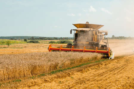 Rotary straw walker cut and threshes ripe wheat grain. Combine harvesters with grain header, wide chaff spreader reaping cereal ears. Gathering crop by agricultural machinery on field on summer season
