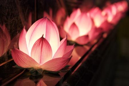 연꽃의 빛 스톡 콘텐츠