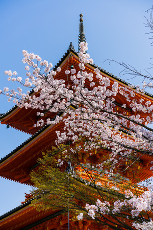 Kiyomizudera with Blossom from Japan