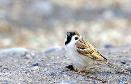 resting: Bird resting on the ground