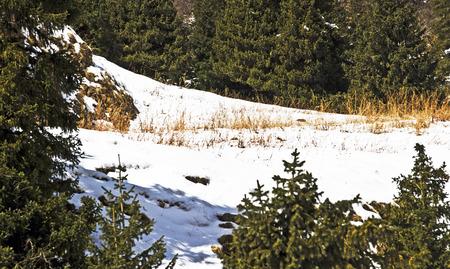 winter scenery: winter scenery
