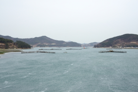 Korean Traditional Method for Fishing anchovy by flow of sea water, using bamboo fence photo