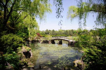 bridge in the ByeokChoji arboretum, Korea photo
