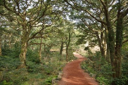Nutmeg Forest park in Jeju Island, called Bijarim in Korean photo