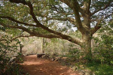 Nutmeg Forest park in Jeju Island, called Bijarim in Korean