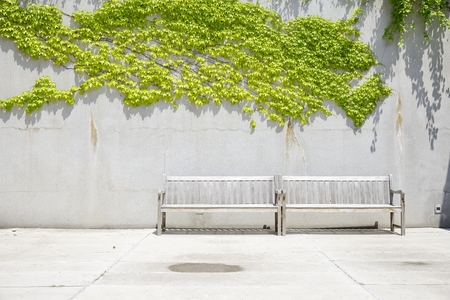 two wooden benches in front of concrete wall with vines photo