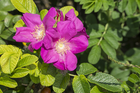 Nahaufnahme von sweet Blumen in voller Blüte Standard-Bild - 32882592