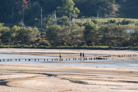 rickety: YEONGJU, KOREA - OCTOBER 15, 2014:  people on a single lane log bridge in Museom Village. Museom is a famous for the single lane log bridge in Korea.