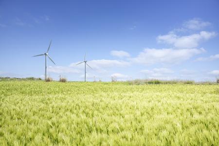 cebada: Paisaje de campo de cebada verde y generador de viento con el cielo nublado azul en Gapado Isla de la isla de Jeju, en Corea.