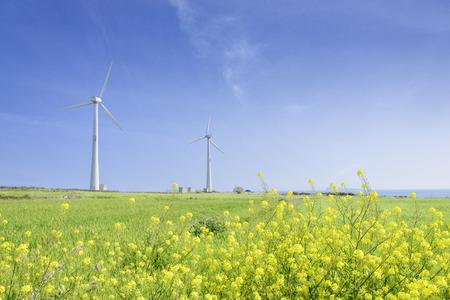 Landscape of green barley field and yellow canola flowers with wind generator in Gapado Island of Jeju Island, Korea. 스톡 콘텐츠