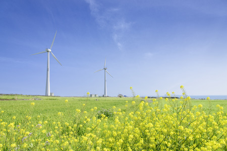 Landscape of green barley field and yellow canola flowers with wind generator in Gapado Island of Jeju Island, Korea. Banque d'images