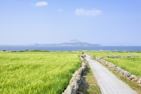 Landscape of Sanbangsan and Songaksan with Olle trail in a green barley field view from Gapado Island of Jeju Island in Korea. 스톡 콘텐츠