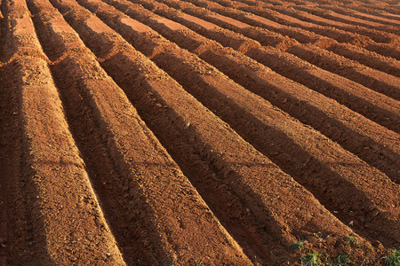 ploughed: ploughed brown fertile farmland in a spring