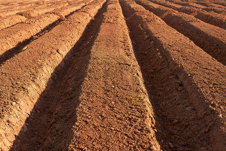 fertile: ploughed brown fertile farmland in a spring