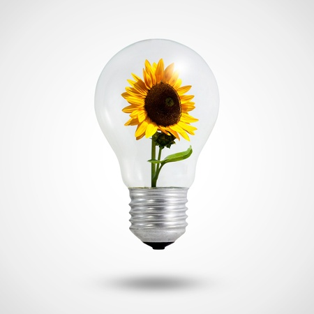 eco concept  light bulbs with Sunflower blooming inside  photo