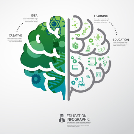 brain: infographic Template brain education and science concept vector illustration Illustration