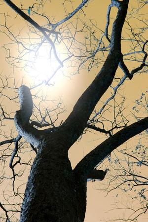 twilight: twilight, tree