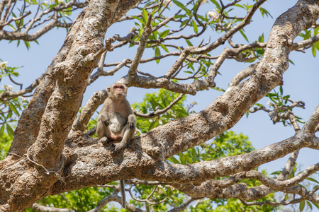 impish: Monkey on the tree and blue sky Stock Photo