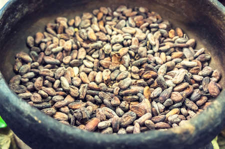 Theobroma cacao beans of Mexico are famous for making chocolate, cocoa powder and cocoa mass with cross-processing filter applied