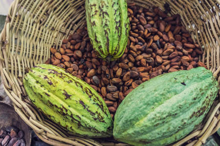 tabasco: Fresh cacao pots and brown beans from Tabasco,Mexico in a wicker basket with vintage filter applied  Stock Photo
