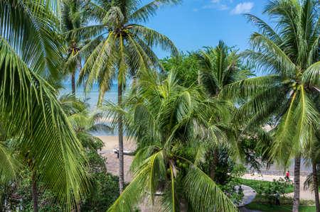 cha: Coconut trees along the beach in Cha Am ,Petchaburi, Thailand