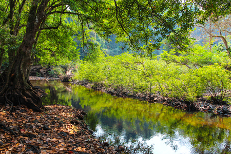 Stream in Khao Yai National Park of Thailand. Stock Photo