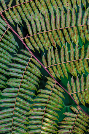 Close-up of fern leaf. Stock Photo
