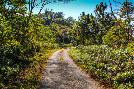 Trail in Doi Lang Forest, Chaing Mai, Thailand. Stock Photo