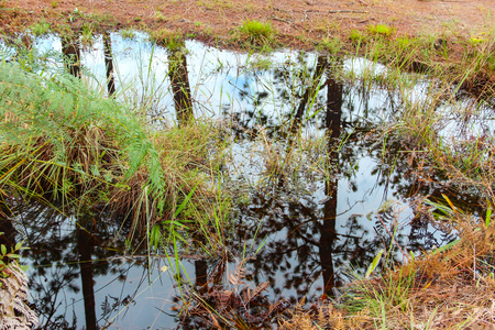 Reflection of tree on the stream at Phukradueng, Thailand. Stock Photo