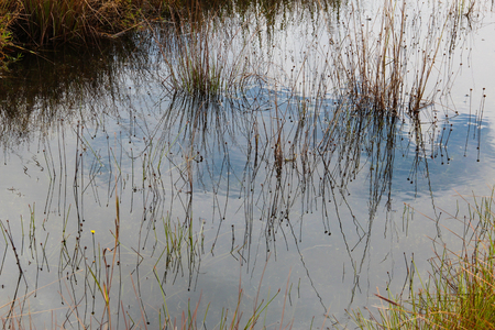 Reflection of sky and grass on stream at Phu Kradueng, Thailand. Stock Photo