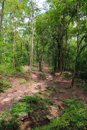 Trail in Phu Kradueng National Park, Loei, Thailand. Stock Photo