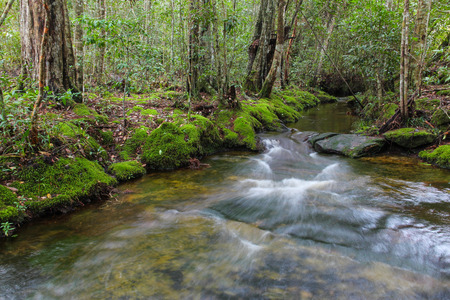 Steam in Phu Kradueng National Park, Loei, Thailand. Stock Photo
