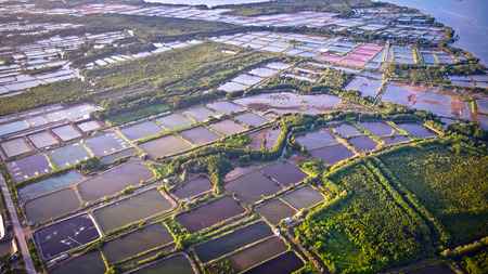 Aerial view of shrimp farm and air purifier in Thailand. Continuous growing aquaculture business is exported to the international market.