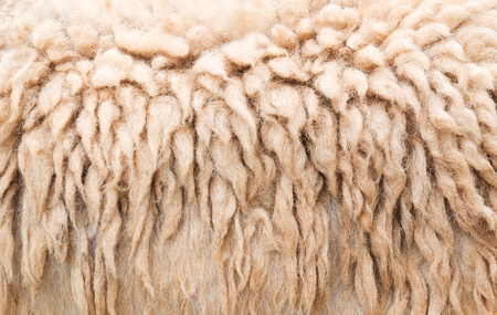 Sheep wool for manufacturing background. Stock fotó