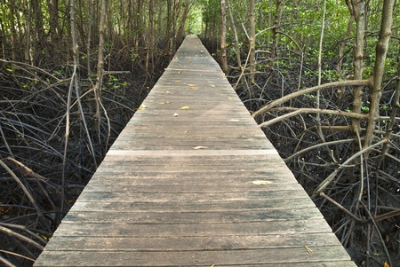 environmen: path way for study mangrove forest Stock Photo