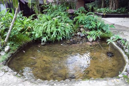 exotic fish: Hermoso estanque con peces ex�ticos