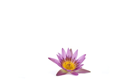 Beautiful water lily flower on white back ground Stock Photo - 15787979